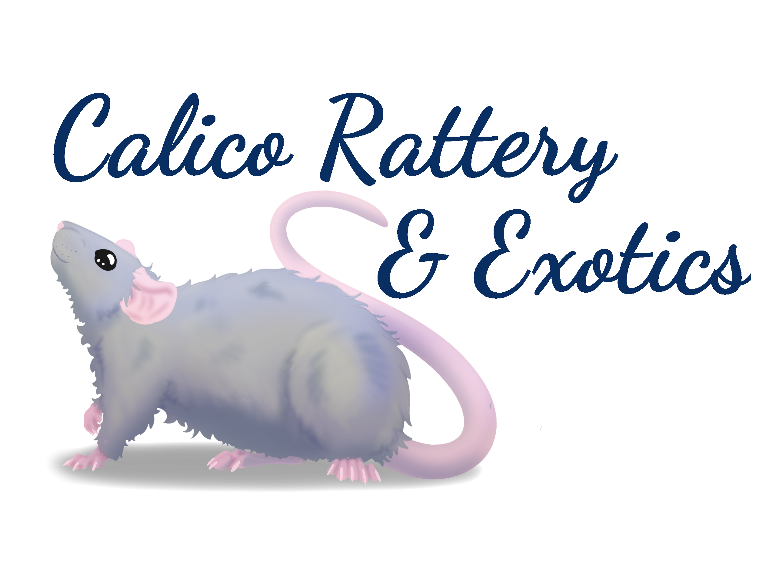 Calico Rattery and Exotics